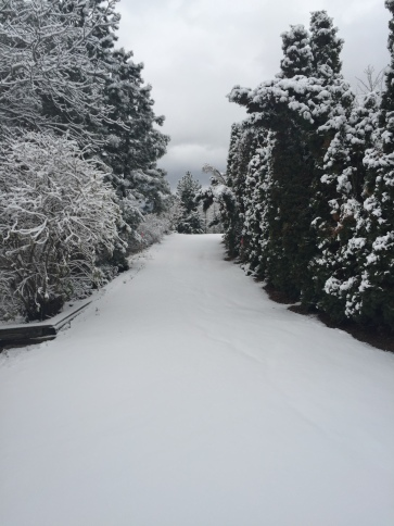 First snowfall 2015 on driveway